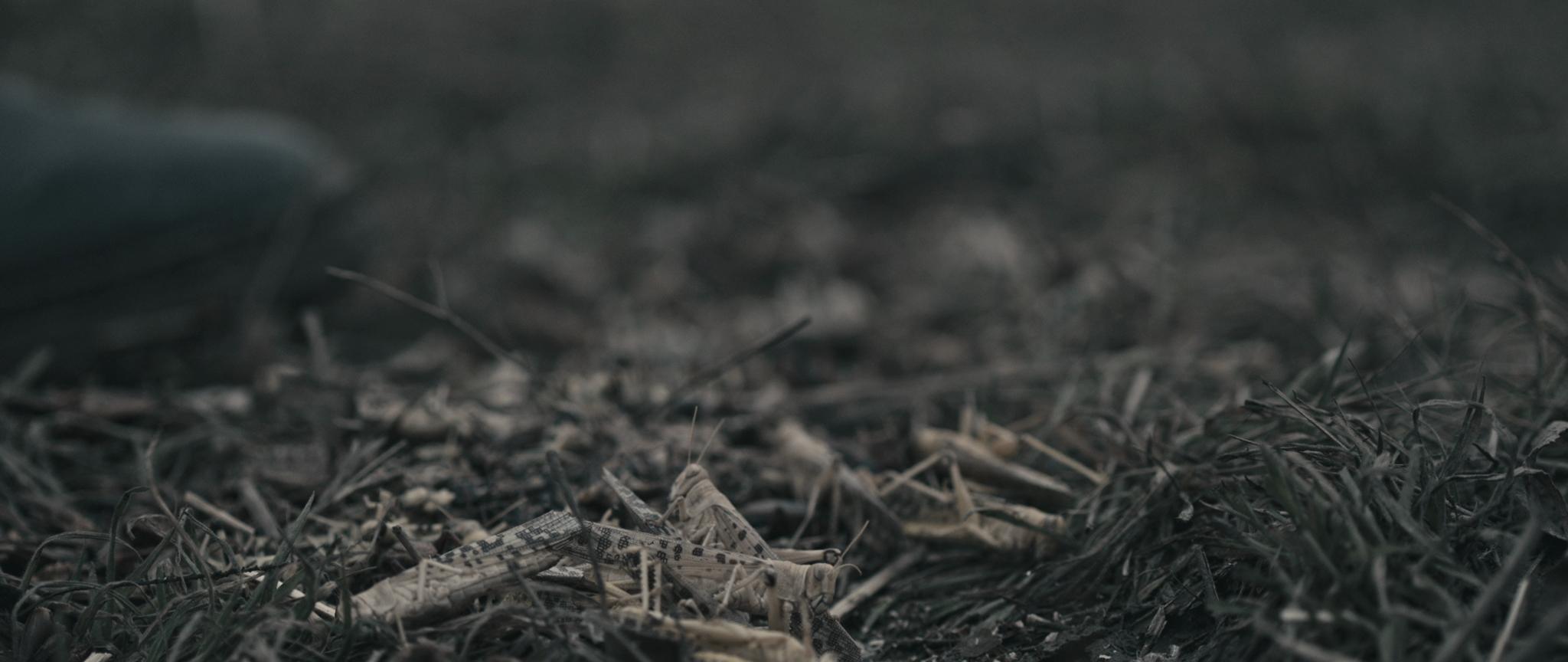 Kurzfilm Shelter Image